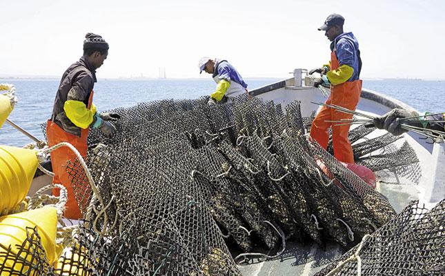 Oyster Farming In Saldanha Bay
